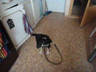 Новое фото Продажа собак, щенков Отдам в добрые руки щенка, 34863504 в Саратове