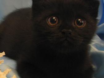 Уникальное фото Отдам даром Возьму котенка в добрые руки 37851557 в Саратове