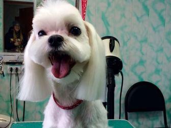 Просмотреть foto Стрижка собак Стрижка собак и кошек 37790492 в Серпухове