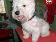 Стрижка собак в Симферополе Профессиональная Стрижка домашних животных.   От сам