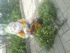 Скачать бесплатно foto  веники для бани и сауны 39260303 в Смоленске