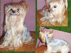 Свежее изображение Стрижка собак Стрижка собак в Смоленске недорого 40038658 в Смоленске