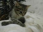 Свежее фотографию Отдам даром - приму в дар Котик и кошечка, возраст 1 месяц, ищут добрых и заботливых хозяев, 65036059 в Смоленске