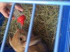Изображение в   Продаю кролики виесте с домиком, есть поилка в Ставрополе 0
