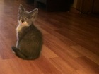 Скачать изображение Отдам даром Котята от домашней кошки 36687022 в Ставрополе