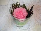 Новое фотографию  Роза в стаканчике - для всех влюбленных и любящих сердец! 68853311 в Стерлитамаке