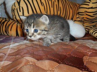 Смотреть изображение Отдам даром Отдам котят в добрые руки 32733377 в Стерлитамаке