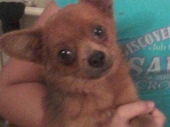 Скачать изображение Отдам даром щенок в дар 33798923 в Стерлитамаке