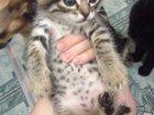 Изображение в   Отдам котят в добрые руки, котята к лотку в Сургуте 0