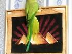 Скачать изображение  Продаю 36856152 в Сыктывкаре
