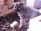 Фотография в Собаки и щенки Продажа собак, щенков Замечательные, милые щеночки-девочки очень в Таганроге 0