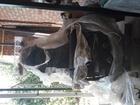 Свежее foto Разное Продаю(продам,реализую) станок горизонтально-фрезерный мод, 6Т80 68184936 в Таганроге