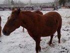 Увидеть фото Другие животные Продам 33772502 в Тайшете