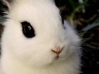 Смотреть изображение  Меняю декоративного кролика на черепашек сухопутных, 37442647 в Москве