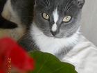 Уникальное изображение Отдам даром - приму в дар Отдам котёнка 39015030 в Тюмени