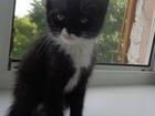 Скачать бесплатно foto Продажа кошек и котят Отдам НА СЧАСТЬЕ в добрые руки! 39794164 в Тюмени