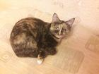 Увидеть изображение  Вязка с котом бесплатно Срочно! 51499491 в Тюмени
