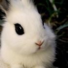Меняю декоративного кролика на черепашек сухопутных