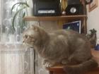 Изображение в   Принимаем предварительный заказ на котят. в Тобольске 4000