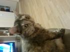 Просмотреть фотографию Отдам даром - приму в дар Кошка Мурка 38615828 в Тольятти