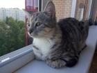 Вязка котов и кошек Тольятти