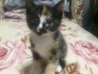 Свежее foto Отдам даром - приму в дар Отдам в хорошие руки котят, 68656528 в Томске