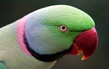 Куплю попугая