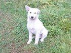 Изображение в Собаки и щенки Продажа собак, щенков Отдам даром щенят в хорошие руки  Щенки рекс в Туле 0