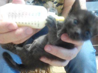 Скачать бесплатно фото Продажа собак, щенков Котята растут без матери 33389161 в Твери
