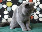 Фотография в   Продаются котята, породы - экзотическая в Уфе 20000