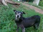 Фото в Собаки и щенки Продажа собак, щенков Нашла собачку! длительное время ожидала хозяина в Уфе 0