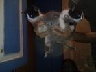 Фото в Отдам даром - Приму в дар Отдам даром Отдам котят в хорошие руки от красавицы кошки. в Уфе 100