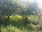 Скачать фото  Садовый участок в собственности 69411917 в Уфе