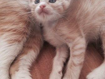 Просмотреть изображение  Отдам котят в хорошие руки 36971896 в Уфе