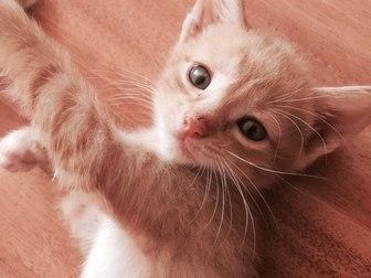 Смотреть фотографию  Отдам котят в хорошие руки 36971896 в Уфе