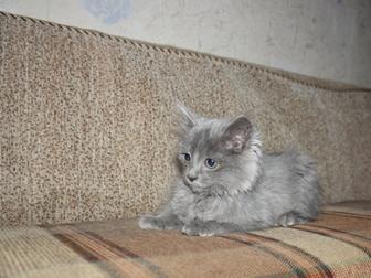 Увидеть foto Отдам даром Отдам котенка 37579350 в Уфе