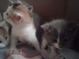 Новое изображение Отдам даром - приму в дар отдам в дар котят 37764811 в Уфе