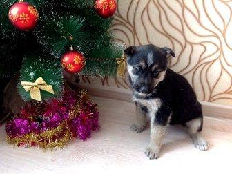 Скачать изображение  Щенки девочки от большой собаки в добрые руки 34301298 в Улан-Удэ