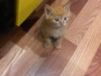 Новое изображение Отдам даром - приму в дар рыжий котёнок в дар 38801000 в Улан-Удэ