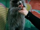 Фотография в Услуги компаний и частных лиц Фото- и видеосъемка вход 150 рублей Открыт контактный зоопарк в Ульяновске 150