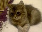 Фото в Кошки и котята Вязка Молодая домашняя кошечка 1 год 4 месяца ищет в Усть-Лабинске 0