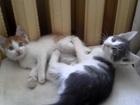 Скачать бесплатно foto  котята 35480177 в Владимире