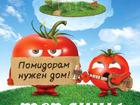 Новое фото  Теплицы для томатов Александров 38579058 в Александрове