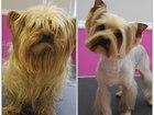 Просмотреть фото Стрижка собак Стрижка собак по фиксированным ценам 46467634 в Владимире