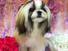 Увидеть фотографию Стрижка собак Стрижка собак по фиксированным ценам 46467634 в Владимире