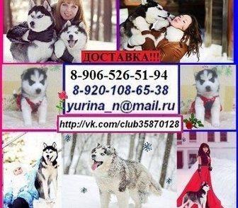Фото в Собаки и щенки Продажа собак, щенков В продаже на выбор 4 красивенных пёсика хаски. в Владимире 0