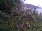 Свежее фото Земельные участки Продам участок и дом 32448418 в Владивостоке
