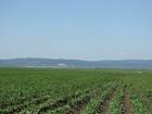 Скачать фото  Продам земельный массив в Кемеровской области г, Новокузнецк 34526529 в Владивостоке