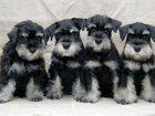 Изображение в Собаки и щенки Продажа собак, щенков Примем в дар пожалуйста помогите исполнить в Волгодонске 100