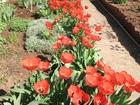 Скачать фото  Продается дача в садоводстве Волгодонской садовод 61267823 в Волгодонске
